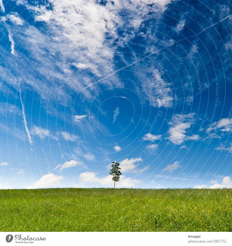 summertime Umwelt Natur Landschaft Pflanze Urelemente Luft Himmel Wolken Horizont Sonne Sonnenlicht Sommer Klima Klimawandel Wetter Schönes Wetter Baum Gras
