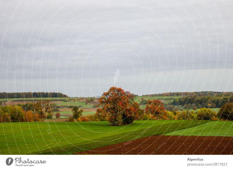 Fahndungsbild: Herbst (ausgebrochen!) Jahreszeiten Oktober Klima mehrfarbig Herbstbeginn Natur Herbstlaub Blatt Herbstfärbung herbstlich Umwelt Tag Licht