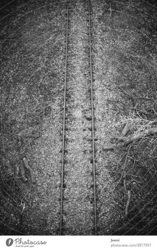 Alte Bahnschienen im Wald Bahnstrecke alt zugewachsen menschenleer von oben Brücke Bäume Gestrüpp Totholz Baum marode Landschaft Außenaufnahme Laub dunkel