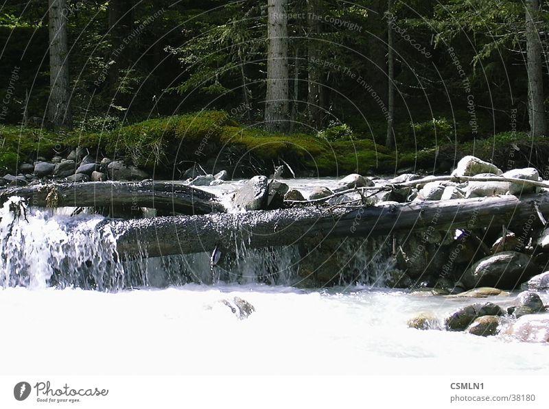 Gebirgsbach Wasser Berge u. Gebirge Bach Wildbach Staustufe