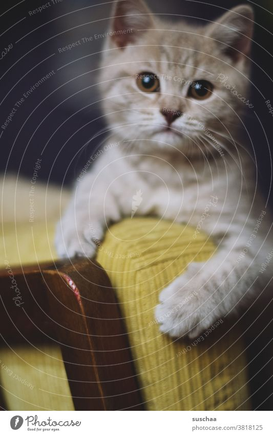 katze Katze Kater Katzenkind Kitten Katerchen Fell Haustier Tier Hauskatze Schnurrhaar Stubentiger Tierporträt Säugetier Auge Tiergesicht Pfoten Katzenkopf