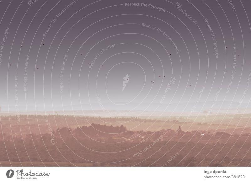 Zugvögel Umwelt Natur Landschaft Pflanze Tier Frühling Schönes Wetter Nebel Hügel Berge u. Gebirge Israel Naher und Mittlerer Osten Vogel Zugvogel Schwarm