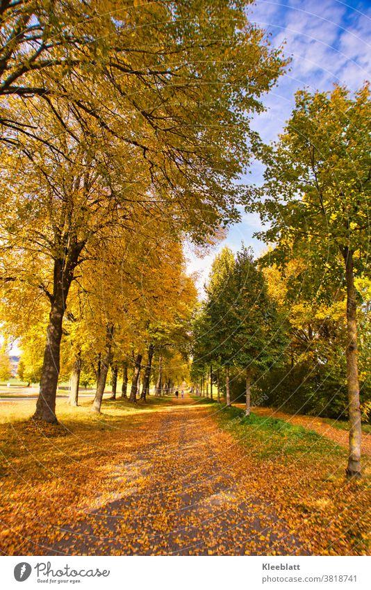 Wenn Blätter von den Bäumen tanzen und die Natur sich in goldene Farben hüllt - dann ist Herbst Weg mit Blätter herbstlicher Hintergrund