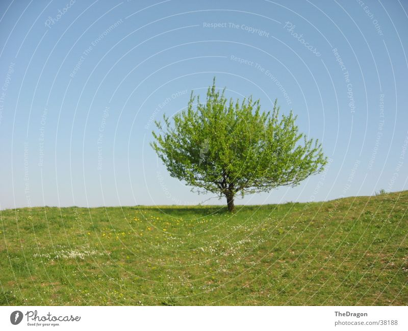 Sommerbaum - summer tree Baum Blatt Wiese Physik Ebene Himmel blau Wärme Landschaft leaves heaven blue