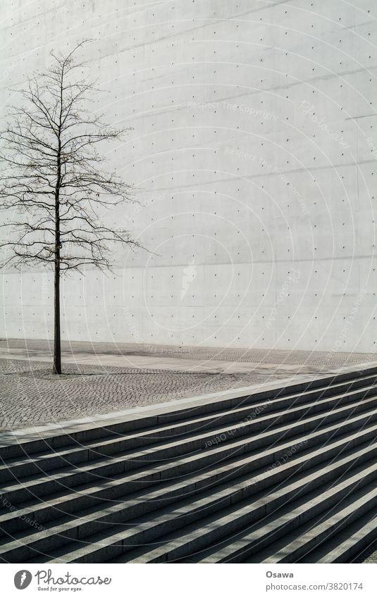 Stadtgrün Baum Pflanze Baumkrone Baumstamm Stadtbaum Kofferraum Niederlassungen Beton Stein kahl Platz Wand Sichtbeton trist grau Textur Treppe Freitreppe