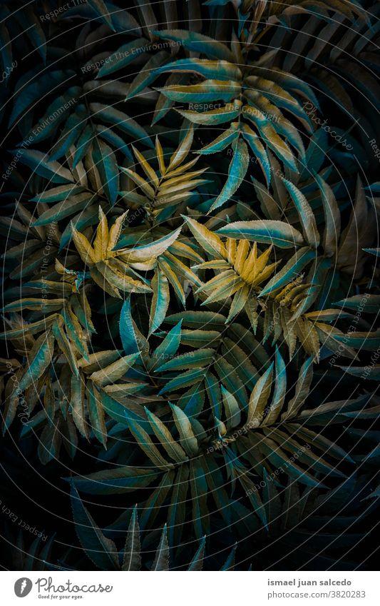 grüne Pflanzenblätter in der Natur in der Herbstsaison, grüner Hintergrund Blätter Blatt Garten geblümt natürlich Laubwerk dekorativ Dekoration & Verzierung