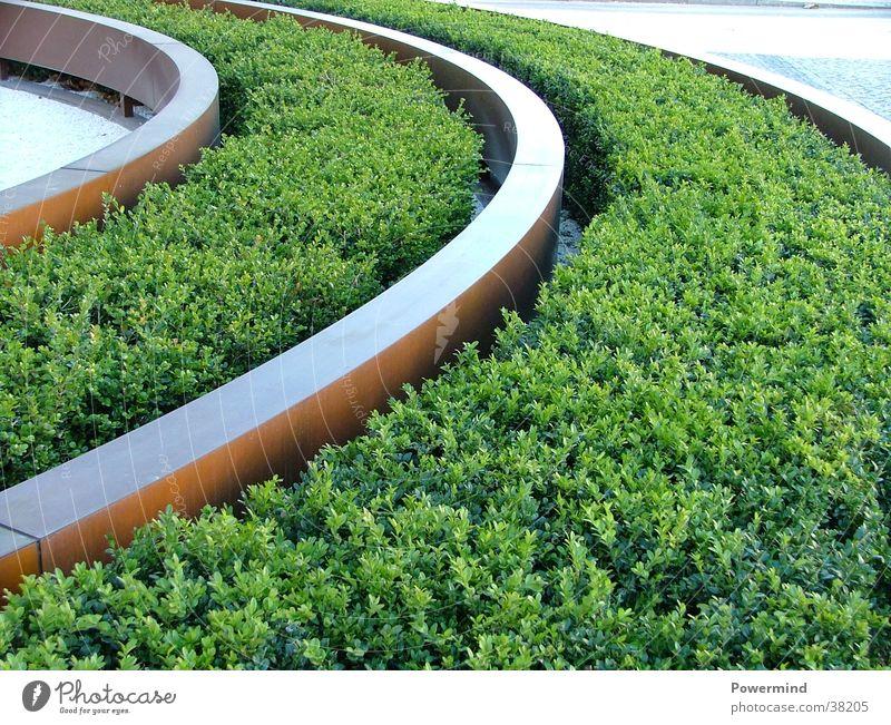 gras wächst wie auf schienen Gleise Gras Architektur Blumenbeet Bertlelsmann Entrance