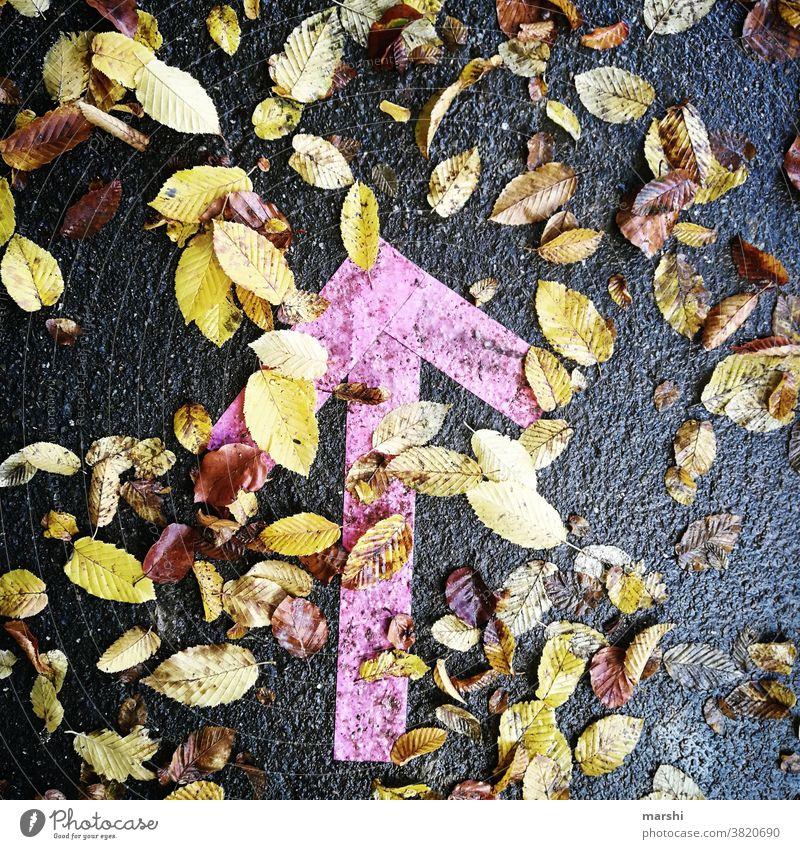 Herbst2020   hier entlang pfeil wegweise herbst corona abstand pink blätter herbstlich natur draußen abstand halten abstandsregel distanz Pfeilspitze
