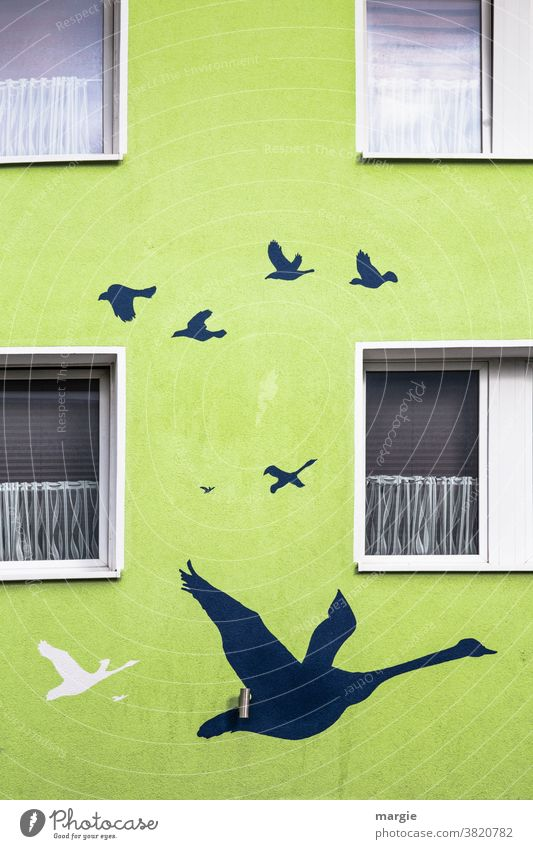 Kunst am Bau   Die Zugvögel sammeln sich Haus Fenster Gardine Malerei u. Zeichnungen Gemälde Wand gänse Zugvogel Rollladen Lampe streichen zeichnen Künstler