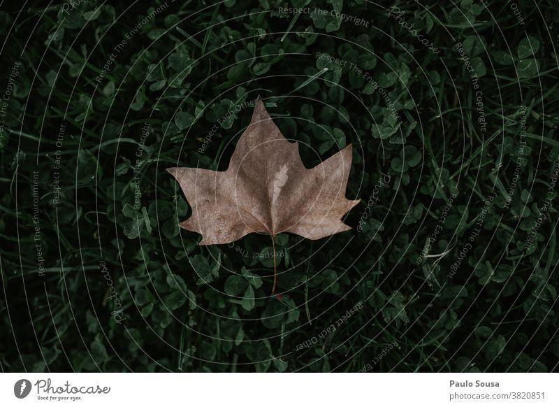 Blatt auf dem Gras Blattgrün Blätter Herbst herbstlich Herbstlaub fallen mehrfarbig Baum Außenaufnahme Menschenleer Tag Farbfoto Herbstbeginn Natur