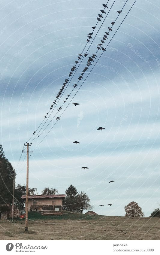 gute reise! Wiese Bauernhof Reise Himmel Strommast Energie Gemeinschaft Schwarm Wildtier Tiergruppe fliegen Zugvogel Vogelschwarm Freiheit Wolken Herbst frei