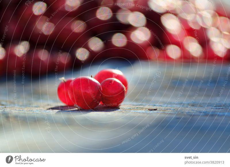 Mehrere durchsichtige rote Preiselbeeren auf einer alten rauen hölzernen blauen Oberfläche auf einem Hintergrund aus vielen roten Beeren an einem sonnigen Herbsttag. Die gesammelten roten Cranberries, transparent in der Sonne.