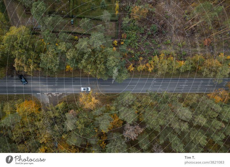 Herbststraße mit Autos Brandenburg Natur Landschaft Menschenleer Farbfoto Außenaufnahme Umwelt Tag Wald Baum Pflanze Straße road autumn Brandenburg an der Havel