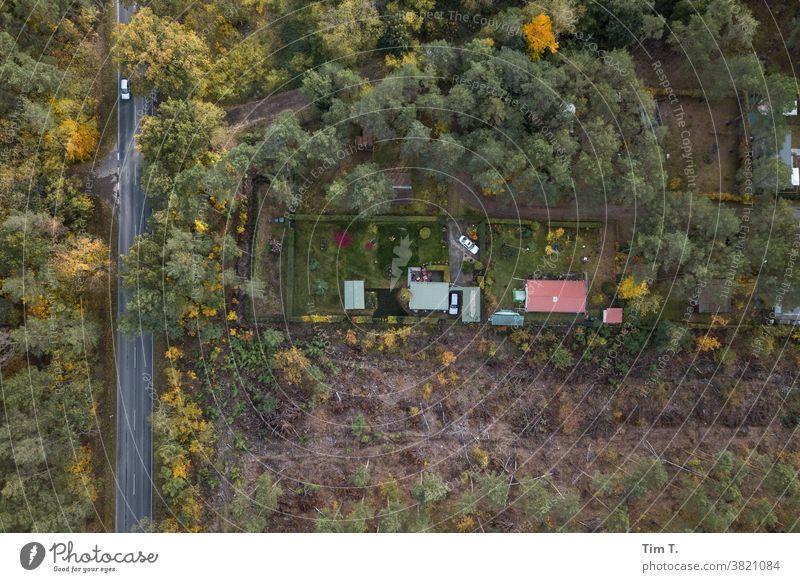 Eine Gartenanlage von oben in Brandenburg Wald Außenaufnahme Menschenleer Natur Farbfoto Baum Herbst grün Umwelt Tag Landschaft