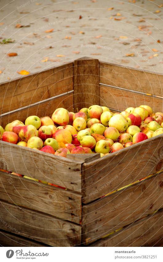 Frisch geerntete Äpfel in einer Holzkiste Apfel Frucht Bioprodukte Lebensmittel Vegetarische Ernährung Saft Herbst Natur natürlich saftig sauer süß gelb grün