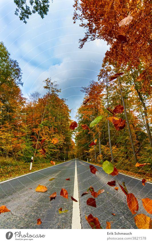 Eine gerade Landstraße durch einen typischen bunten Wald im Herbst Wald, Bäume, Natur, Herbstfarben laub Landschaft fallendes laub Straße Herbstlaub herbstlich