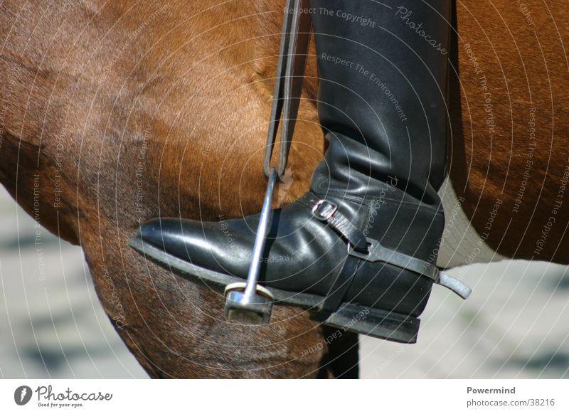 HochOben schwarz Sport springen braun Schuhe Geschwindigkeit Pferd Fell fallen Stiefel aufsteigen beweglich Reitsport Stall Reiter Abteilung