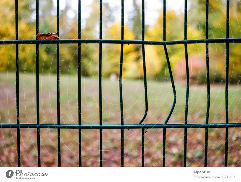 Der Herbst ist ausgebrochen Zaun Zaunlücke verbogen Farbfoto Menschenleer Außenaufnahme Schwache Tiefenschärfe Schönes Wetter Licht Tag Garten Umwelt herbstlich