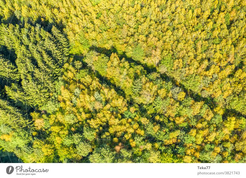ein Herbstwald von oben in der Sonne Wald von oben Saisonwald saisonbedingt sonnig Baum Bäume Mischwald