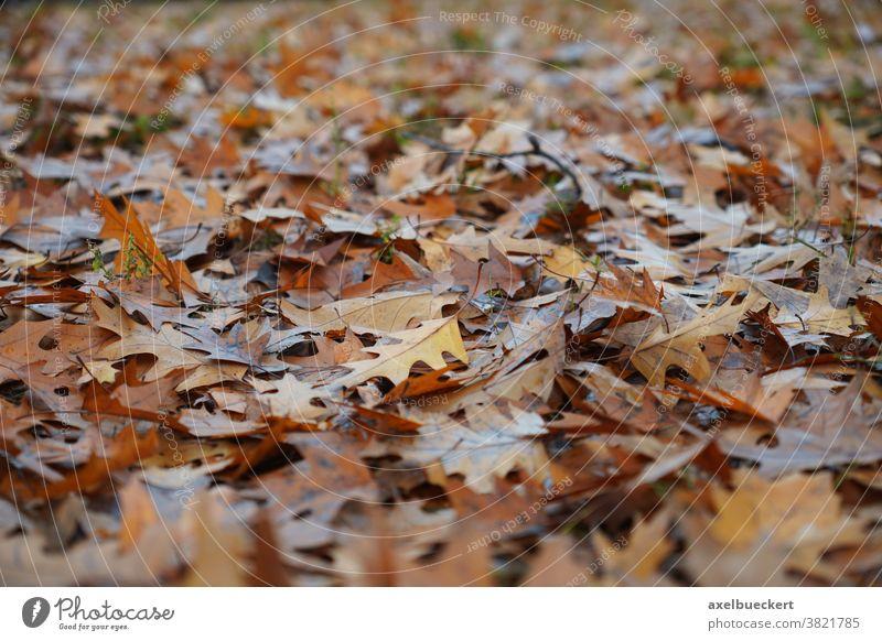 Herbstlaub Hintergrund Blatt herbstlich Natur Boden bedeckt Waldboden braun Herbstfärbung Hintergrundbild Schwache Tiefenschärfe Nahaufnahme Vergänglichkeit