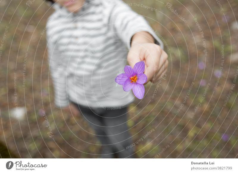 Kind hält lila Krokus Herbst Herbstlicher Krokus schön Schönheit Blütezeit Überstrahlung verschwommen botanisch Botanik Knolle Glühbirnen Kindheit abschließen