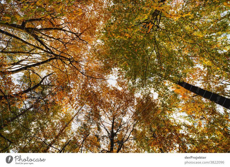Bäume mit bunten Blättern im Gegenlicht Starke Tiefenschärfe Sonnenstrahlen Sonnenlicht Kontrast Schatten Tag Licht Textfreiraum unten Textfreiraum links