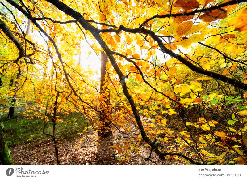 Buche mit bunten Blättern im Gegenlicht Starke Tiefenschärfe Sonnenstrahlen Sonnenlicht Kontrast Schatten Tag Licht Textfreiraum unten Textfreiraum links