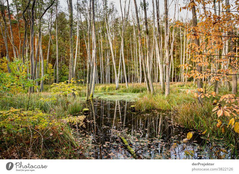 Bäume im Herbst Starke Tiefenschärfe Sonnenstrahlen Sonnenlicht Kontrast Schatten Tag Licht Textfreiraum unten Textfreiraum links Textfreiraum rechts
