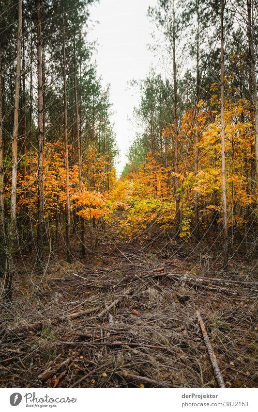 Gerodetes Waldstück mit Resten von Laubbäumen in Brandenburg Starke Tiefenschärfe Kontrast Licht Tag Textfreiraum Mitte Textfreiraum oben Textfreiraum rechts