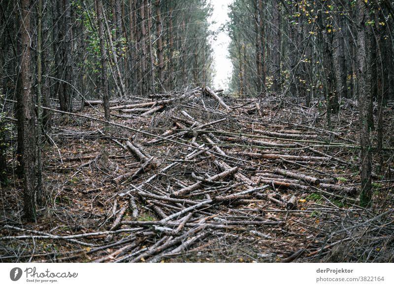 Gerodetes Waldstück in Brandenburg Starke Tiefenschärfe Kontrast Licht Tag Textfreiraum Mitte Textfreiraum oben Textfreiraum rechts Textfreiraum unten