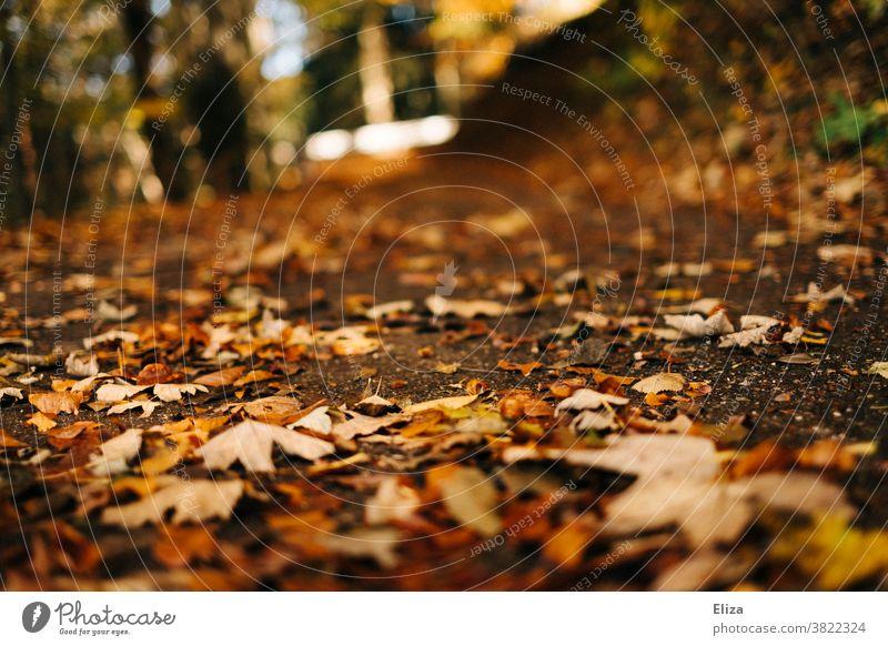 Waldboden mit Laub im Herbst spazieren goldener Herbst Natur bunt herbstlich Sonnenlicht Herbstlaub