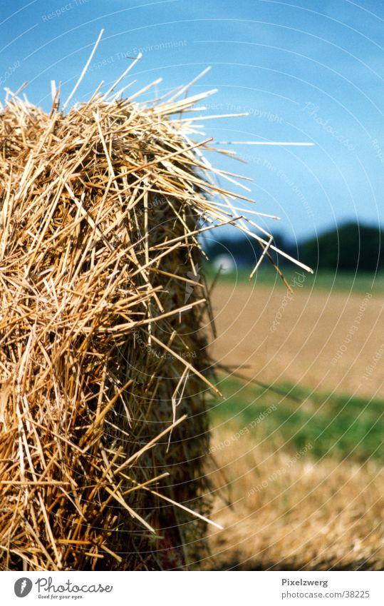Heuballen Stroh Landwirtschaft Wiese Feld Westerwald Landluft