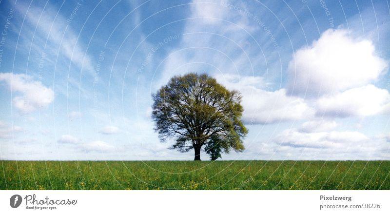 Baum vor Wolken Sommer Wiese Mitte Westerwald Himmel