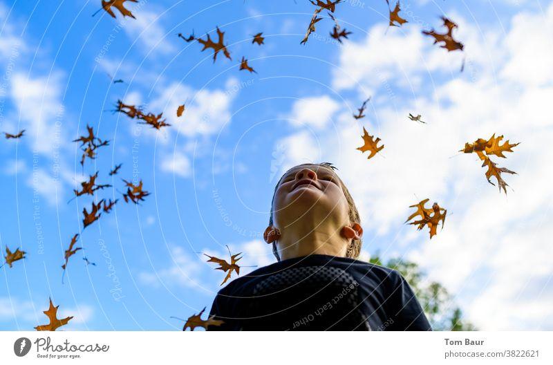Es regnet Blätter Herbstlaub Kind Junge in den himmel schauen Blauer Himmel Froschperspektive Eichenblatt blätter fallen herbstlich herbstliche Stimmung Freude