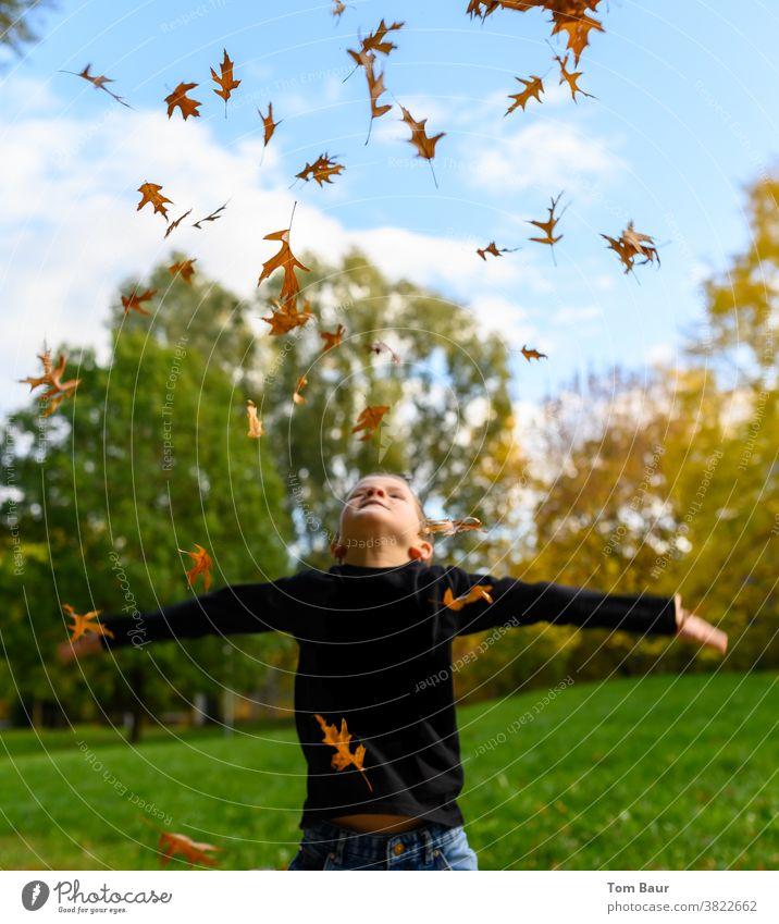 Junge wirft im Park gelb orange farbene Laubblätter in die Luft Herbstlaub Kind in den himmel schauen Blauer Himmel Froschperspektive Eichenblatt blätter fallen