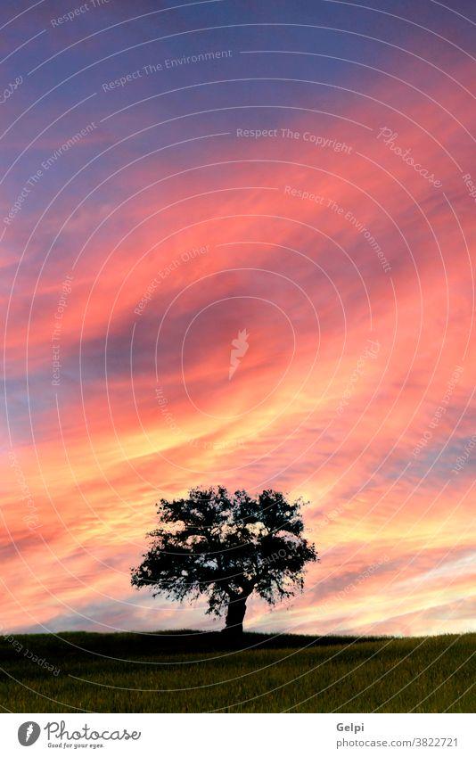 Wunderschöner Sonnenuntergang auf der Wiese Baum Feld Natur Gras Himmel Landschaft Sonnenaufgang Cloud Licht Hintergrund Saison Sommer grün Horizont im Freien