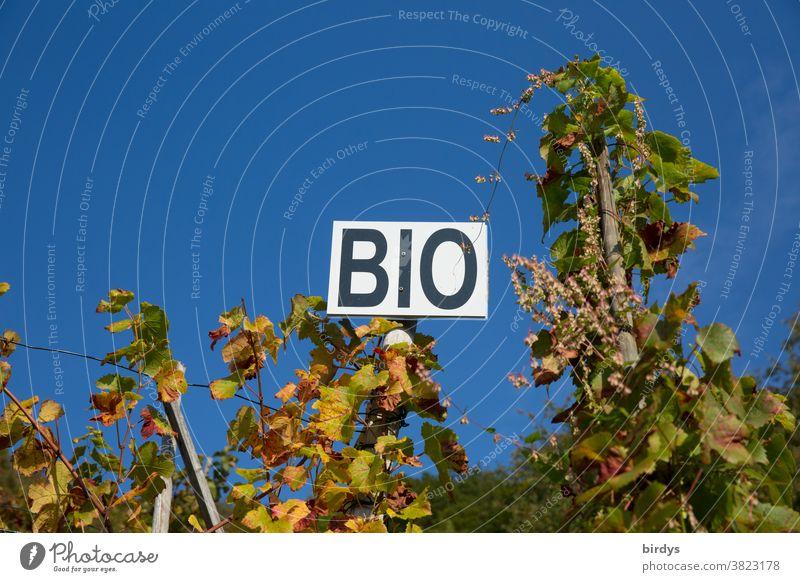 """Biowein, Schild mit der Aufschrift """" BIO """" in einem Wingert, wolkenloser Himmel. Biologische Landwirtschaft Biologischer Weinanbau Bioprodukte Weinreben Weinbau"""