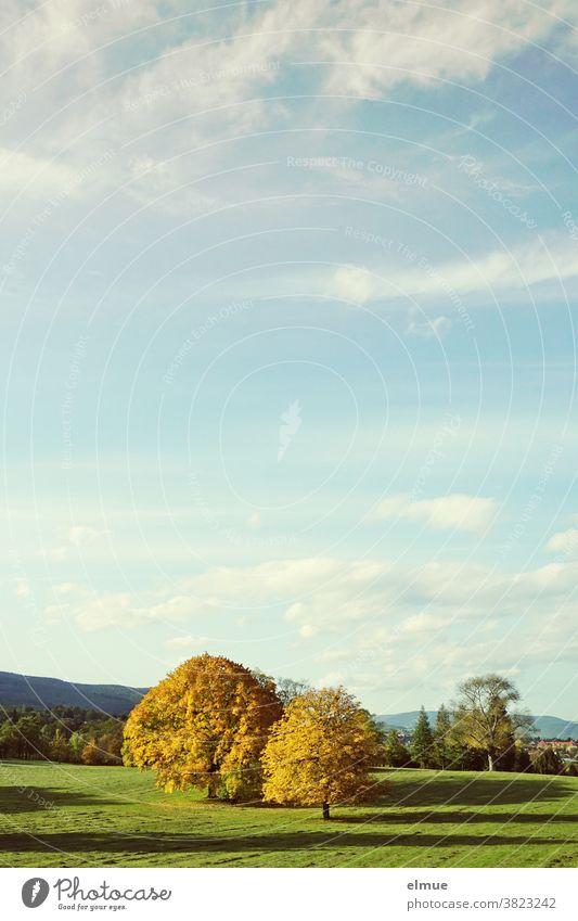 Im goldenen Herbst werfen die gelb gefärbten Ahornbäume auf der noch grünen Wiese unter dem Schönwetterwolkendach lange Schatten. Baum Laubbaum Färbung