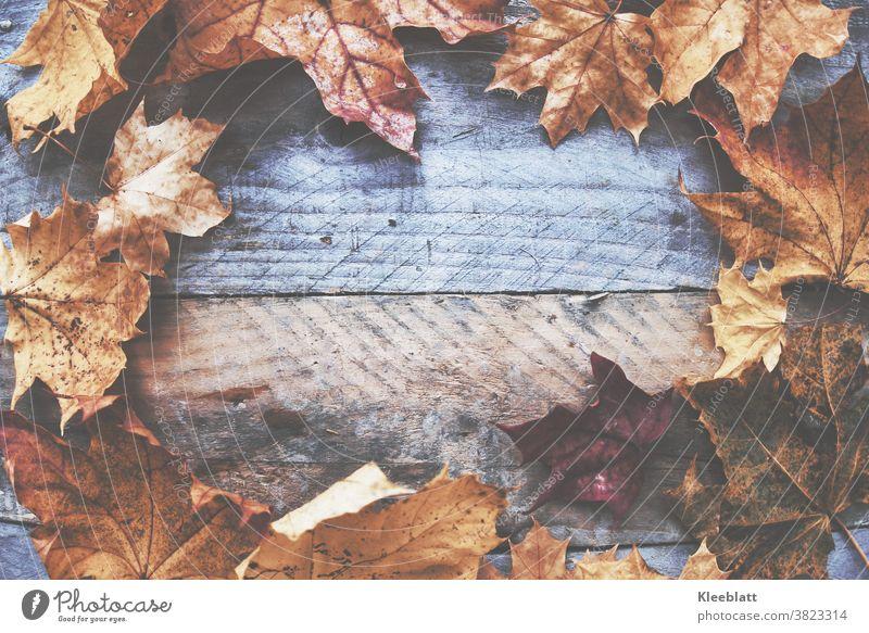 Braunrotes Herbstlaub rund angeordnet auf graubraunem altem Holz mattiert viel Textfreiraum in der Mitte herbstlich Herbstfärbung Laub bunt Blatt Farbfoto