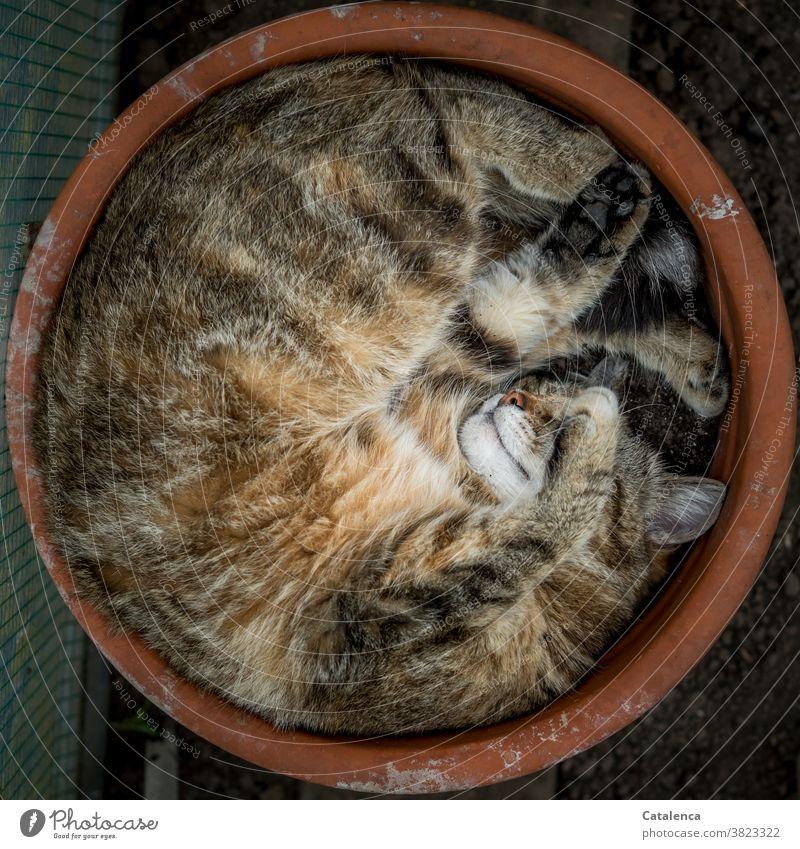 Besetzt | Lieblingsschlafplatz Blumentopf Natur Fauna Katze Tier Tiegerkatze Hauskatze schlafen beweglich Ton Terracotta enstpannung Tierporträt liegen Erholung