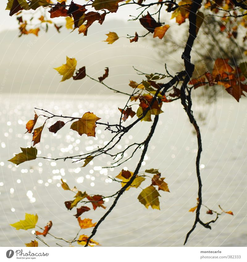 Ick gloob ick spinne | es herbstelt Natur Ferien & Urlaub & Reisen Pflanze Wasser Blatt Umwelt Wärme Herbst natürlich See Stimmung einfach Schönes Wetter Seeufer nah Grünpflanze
