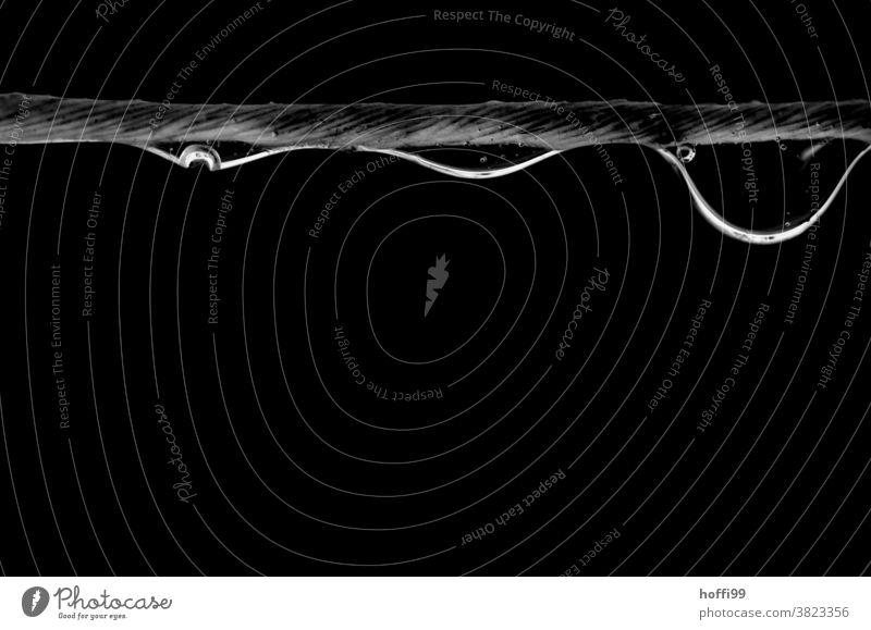 drei Tropfen hängen an einem Faden tropfenbild Garn Faser Tropfenbildung minimalistisch Minimalismus schwarz Wassertropfen Wasseroberfläche nass Schweben