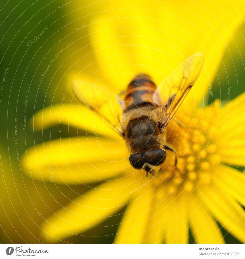 Was guckst du... Umwelt Natur Pflanze Blume Blüte Grünpflanze Wildpflanze Tier 1 dünn klein nah natürlich gelb schwarz Farbfoto mehrfarbig Außenaufnahme