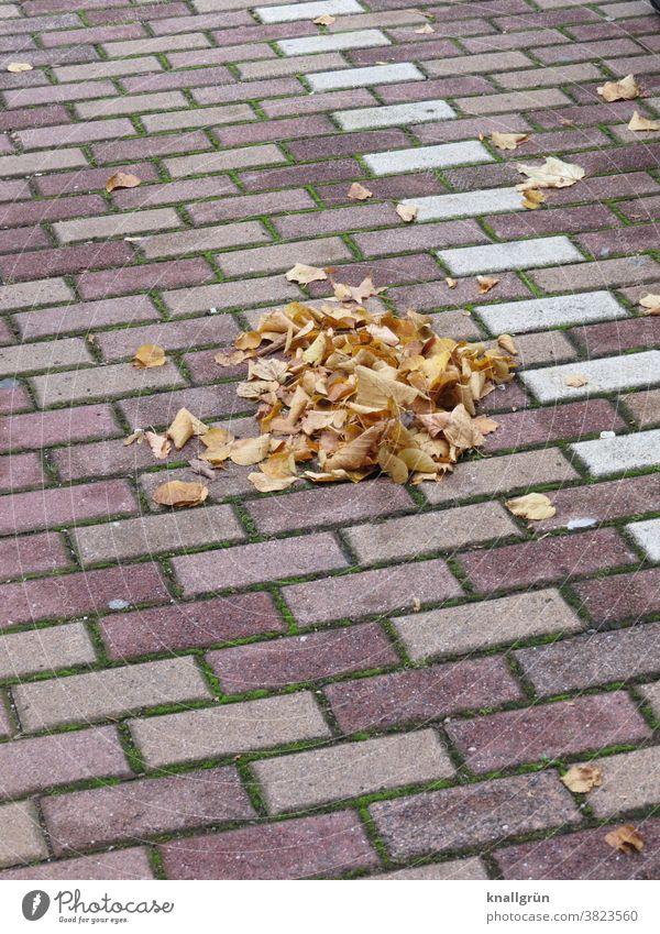 Kleiner Laubhaufen auf einem Parkplatz Herbst Blätter Haufen Blatt Außenaufnahme Herbstlaub Tag Herbstfärbung herbstlich Natur Menschenleer Farbfoto