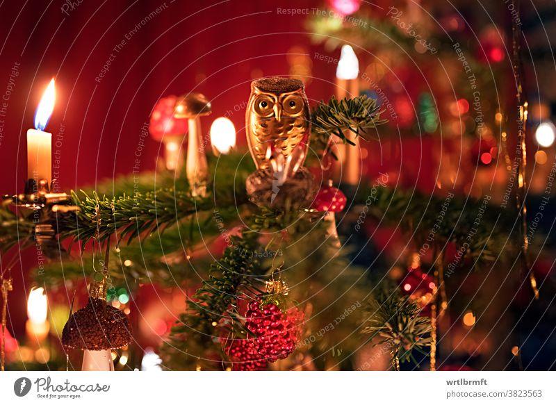 Eule auf einem Christbaum weihnachten christbaumschmuck dekoration funkeln urlaub dezember advent kerze glücklich bunt kugel lametta ferien licht saisonal