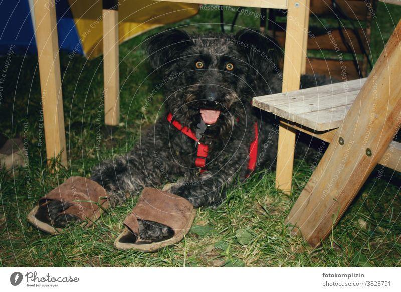 schwarzer Hund mit wachem skurrilem Blick und großen Sandalen an den Pfoten Tierporträt Haustier Hunde Tierliebe Hundeliebe Mensch mit tier Tierkommunikation