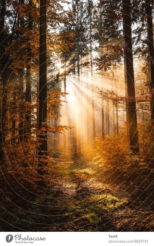 Herbstlicht herbstlich Herbstlaub orange Nebelwald Wald Sonnenstrahlen Bäume Sonnenlicht Warmes Licht Buchenwald Blätter Bayern Bayerischer Wald Hoffnung