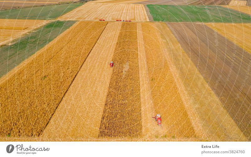 Luftaufnahme von zwei Mähdreschern, Erntemaschinen ernten reifen Mais oben Antenne landwirtschaftlich Ackerbau Agronomie Müsli Kornfeld Land kultiviert