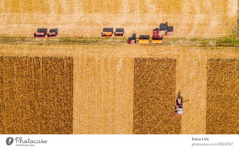 Draufsicht auf das Team landwirtschaftlicher Erntehelfer bei der Ernte von reifem Mais auf dem Feld, Maisfeld oben Antenne Ackerbau Agronomie Ladung Müsli