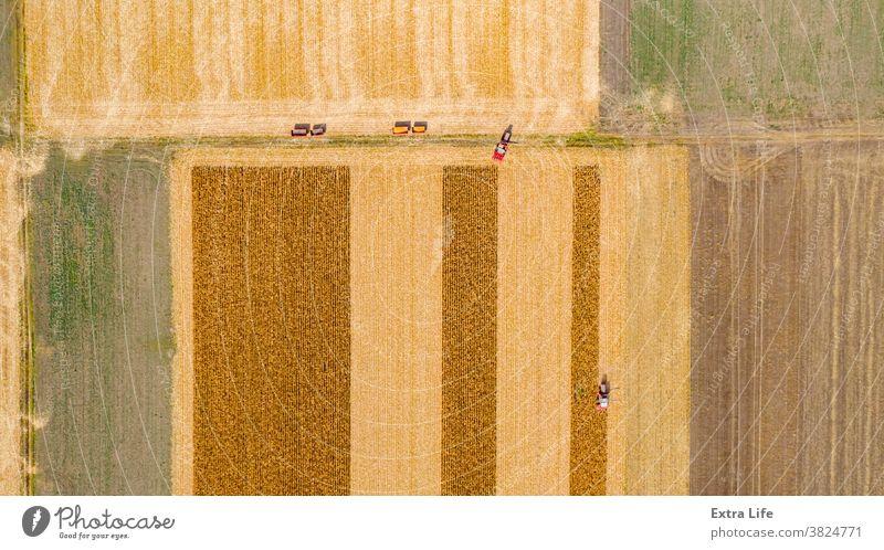 Luftaufnahme von zwei Mähdreschern, Erntemaschinen ernten reifen Mais oben Antenne landwirtschaftlich Ackerbau Agronomie Müsli Kornfeld Land Bodenbearbeitung
